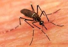 Dengue - Blog do Jeso
